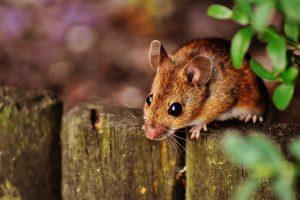 כמה עולה הדברת עכברים ובמה זה תלוי?